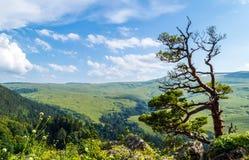 Плато Lago Naki долины в Adygea Стоковые Изображения RF