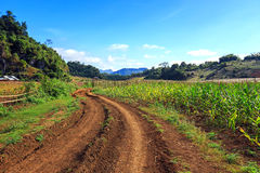 Плато Moc Chau с голубым небом, горой и тропой Стоковое фото RF