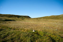 Плато Valdresflye горы, Jotunheimen Стоковое Изображение