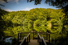 Платформа посетителя национального парка в лесах бука на острове gen ¼ RÃ Стоковое Фото