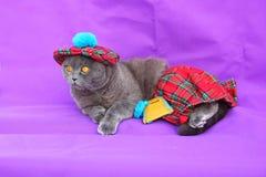 Платье Scottish кота створки Scottish Стоковые Фотографии RF