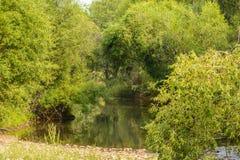Плача верба над рекой Стоковое Фото