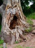 Плача дерево Стоковое Изображение