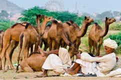 Племенные люди тюрбана на верблюде справедливом, Раджастхане Pushkar, Индии Стоковое Изображение RF