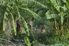 Племя Африки, южной Эфиопии, Hamar стоковая фотография rf