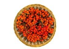 Плетеная деревянная ягода рябины острословия плиты изолированная на белизне Стоковые Фотографии RF