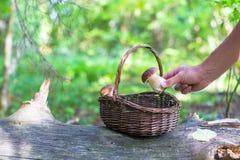 Плетеная корзина вполне грибов в лесе Стоковая Фотография