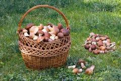 Плетеная корзина вполне грибов в расчистке леса Стоковые Изображения RF