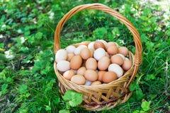 Плетеная корзина с яичками стоит на траве стоковые изображения
