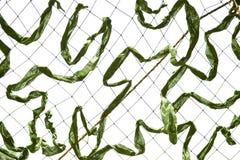 Плетение камуфлирования Стоковые Фотографии RF