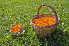 2 плетеных корзины вполне цветений calendula в луге Стоковые Изображения RF