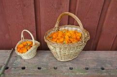2 плетеных корзины вполне цветков ноготк медицинских Стоковые Фотографии RF