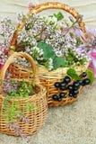 2 плетеных корзины с полевыми цветками Стоковые Фотографии RF