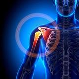 Плечо/лопатка/ключица - косточки анатомии иллюстрация вектора