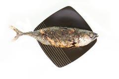 плита зажженная рыбами Стоковое Изображение RF