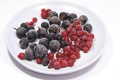 Плита замороженных ягод Стоковые Изображения RF