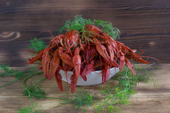 Плита красных clawfishes с фенхелем на деревянной предпосылке Стоковые Изображения RF