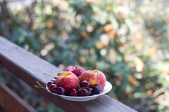 Плита свежих фруктов и ягод на деревянной стойке и естественной предпосылки деревьев абрикоса Стоковое Фото