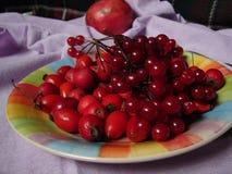 Плита свежих ягод Стоковые Изображения RF