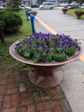 Плита цветков стоковая фотография rf