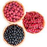 Плиты дерева с ягодами Стоковое фото RF