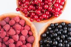 Плиты дерева с ягодами Стоковое Изображение