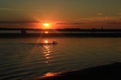 Пловец и восход солнца Стоковые Изображения RF