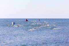 пловцы стоковые фотографии rf
