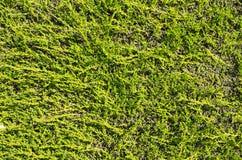 Плоская предпосылка изгороди Стоковая Фотография RF