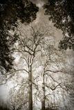 Плоские деревья Стоковая Фотография