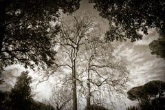 Плоские деревья Стоковые Изображения RF