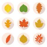 Плоские листья значков Стоковая Фотография RF