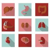Плоские органы значков Стоковые Фотографии RF