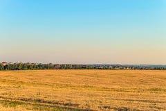 Плоский ландшафт с полем рож и пригородными домами Стоковые Изображения RF