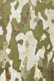Плоский конец коры дерева вверх Стоковые Фото