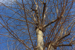 Плоское дерево Стоковое Изображение