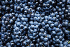 Плоское положение, серии органических голубых виноградин, вино концепции и урожай Стоковое Изображение RF