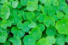Плотное листво Стоковые Фотографии RF