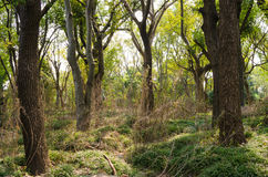 Плотные древесины стоковые фото