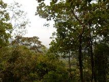 Плотные древесины стоковое изображение rf