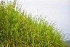 Плотные травы Стоковое Фото