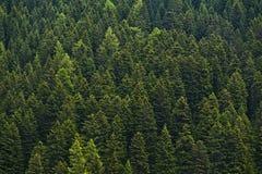 Плотный лес Стоковые Изображения