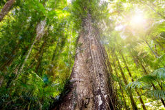 Плотный полог леса осмотренный от земли Стоковое Фото