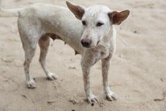 Плохая собака на пляже Стоковые Фото
