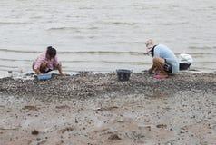 Плохие тайские fishers зарабатывают их прожитие путем собирать clam Стоковое Изображение RF