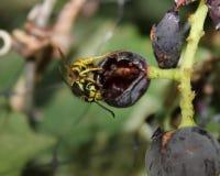 Плодовитая желтая куртка стоковое фото