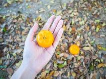Плодоовощи апельсина пар Стоковое фото RF
