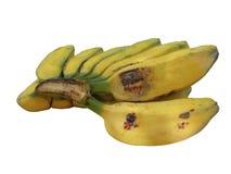Плодоовощи банана и белое backgound Стоковая Фотография RF