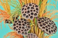 Плодоовощи высушенные орнаментом Стоковое Фото