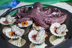 Плодоовощи еды пальца моря с осьминогом Стоковая Фотография RF
